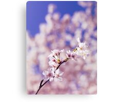Blossoming cherry tree branch art photo print Canvas Print
