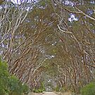 Corridor of trees, Kangaroo Island, South Australia by Margaret  Hyde
