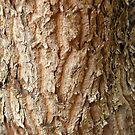 Tree Texture by Joan Wild