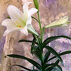 Happy Easter Lily. by evon ski