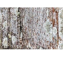 Softened board wall with white moss Photographic Print