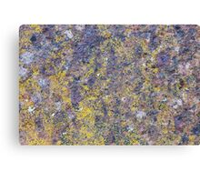 Old rusted metal surface with small yellow mold Canvas Print
