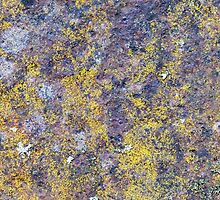 Old rusted metal surface with small yellow mold by Kristian Tuhkanen