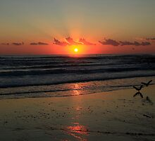 Seagulls Landing At Dawn by Noel Elliot