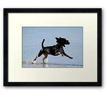 Dogs Just Wanna Have Fun Framed Print