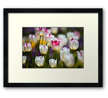 Give me more Tulips Framed Print