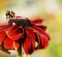 The Bees Knees by Liz Scott
