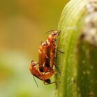 Mating beetles by flashcompact
