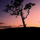 Silhouette At Dusk No.1 by Erin Davis