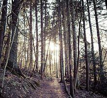 Beaten Path by Stevie B