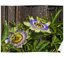 The Passion Flower Poster
