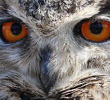 Eagle Owl Stare by Peter Barrett
