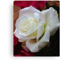Window Glass Rose Canvas Print
