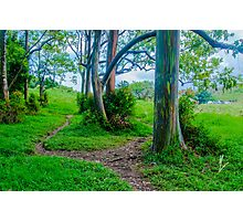 Rainbow (Painted) Eucalyptus Grove Photographic Print