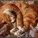 Thomas, Sleeping by Jay Taylor