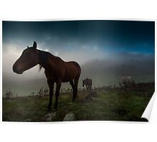 Brumbies in the Mist Poster