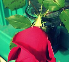 Rose in My Window by PiscesAngel17