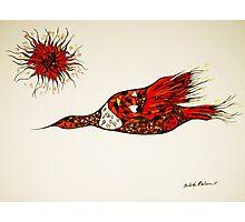 bird in the sun Photographic Print