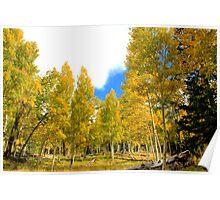 Aspen Trees - Arizona Poster