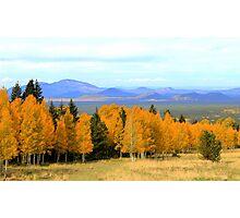 Aspen Trees and Landscape - Arizona Photographic Print