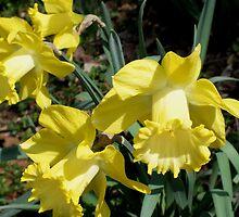 Spring Beauty by Hope Ledebur