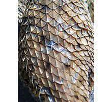 ©NS Reptile Pattern IA Photographic Print