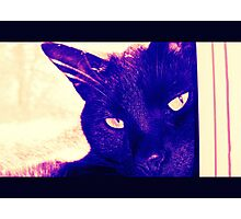 Hip Blueberry Cat Photographic Print