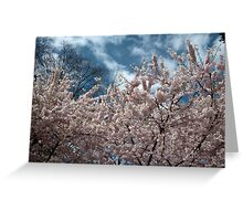 spring pink cherry blossoming tree. Greeting Card
