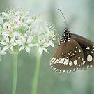Pretty Butterfly by Sue  Fellows