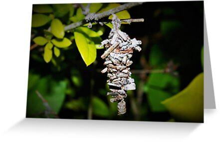 Bagworm cocoon by ♥⊱ B. Randi Bailey