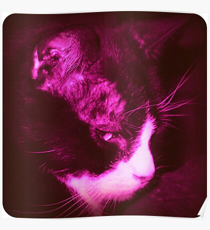 My Cranky Cat - Vintage Poster