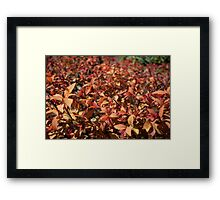 spring bush with red, yellow color leaves. Framed Print