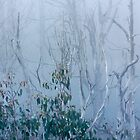 Snow gum regrowth by Vicki Moritz