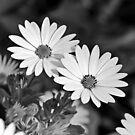 White on Black by shalisa