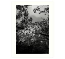 Japan Sakura - Somei Yoshino Art Print