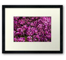 Japan Sakura - Rhododendron wadanum Framed Print