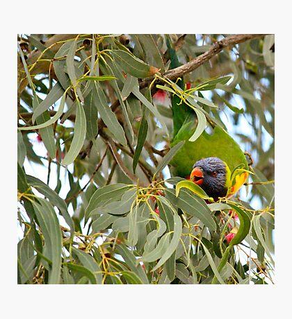 Birdie num num's Photographic Print