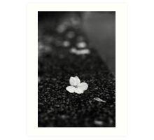 Japan Sakura - Somei Yoshino (Monochrome) Art Print