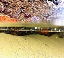 Tide pools by Ryan Goff