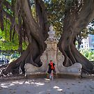 Ancient tree, bench and young lady in Valencia. by naranzaria
