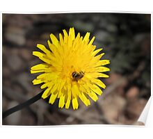 Beeing A Bloom Poster