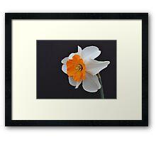 One Daffodil Framed Print