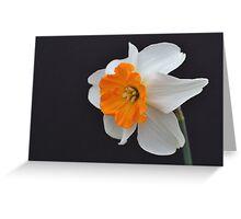 One Daffodil Greeting Card