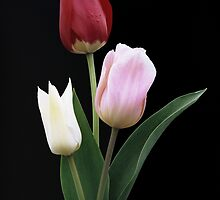 Three Tulips by wolftinz