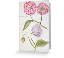 Peony and Double Poppy Greeting Card