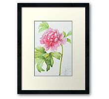 Japanese Tree Peony (Paeonia suffruticosa) Framed Print