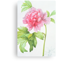 Japanese Tree Peony (Paeonia suffruticosa) Metal Print
