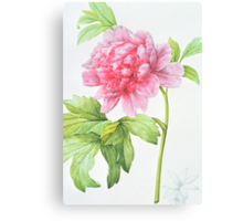 Japanese Tree Peony (Paeonia suffruticosa) Canvas Print