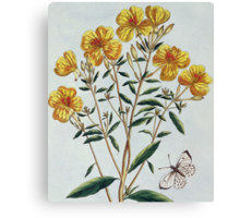 Evening Primrose Canvas Print