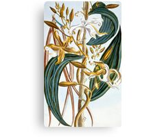 Vanilla pods Canvas Print